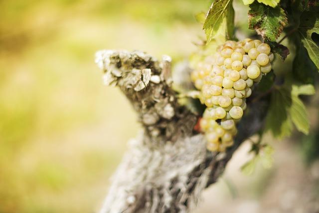 registri viti vinicoli dm 627/2016