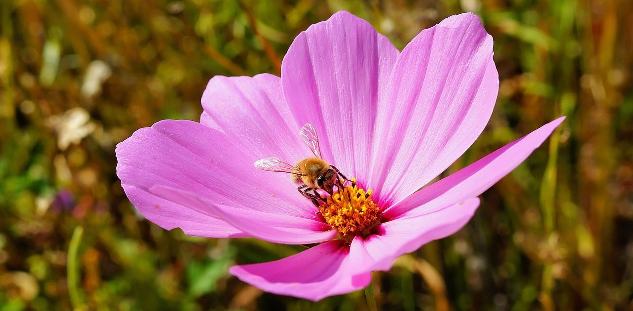 Erbe aromatiche e fiori per la bellezza e per le api