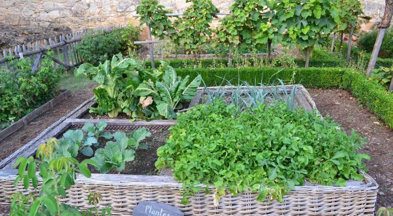 progettare un orto biologico in primavera